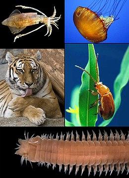 platyhelminthes meghatározási biológia