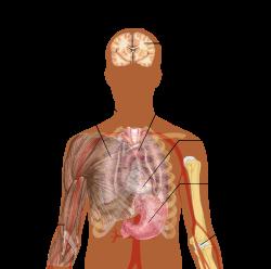 strongyloidosis felnőtteknél